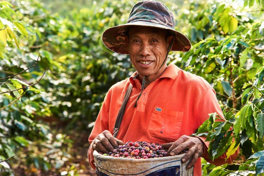 Mangzhang Coffee Harvester